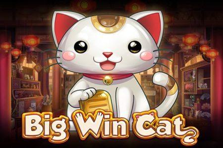 カジノシークレットで人気のビデオスロット分析!【Big Win Cat】